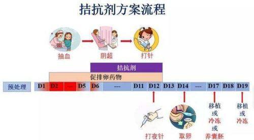拮抗剂方案流程.jpg