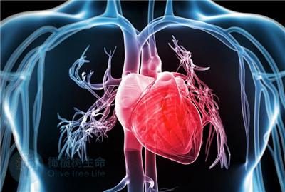 高血压会影响到正常生育吗?试管前如何预防血压过高