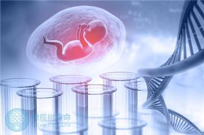试管成功要素:胚胎质量、子宫环境缺一不可!